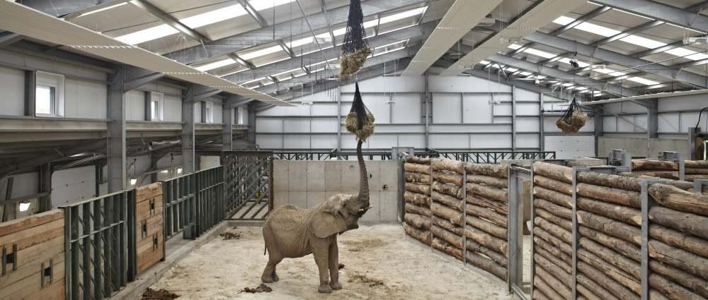 Case Study Safari so good as Steadmans materials help create new elephant house sml